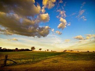large-farm