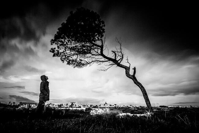 man-watching-tree