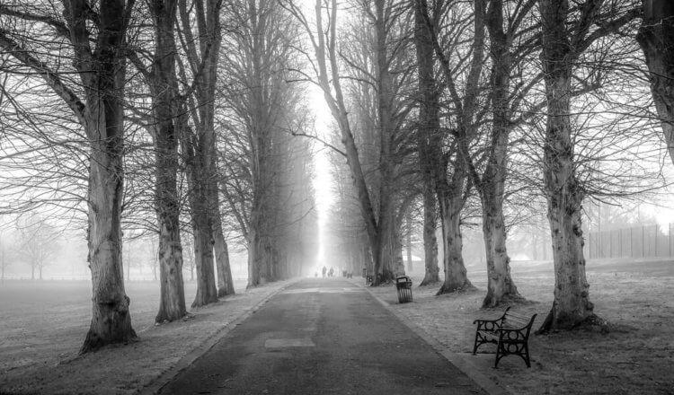 trees-in-mist