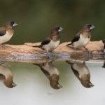 four-birds