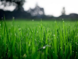 grass-with-water