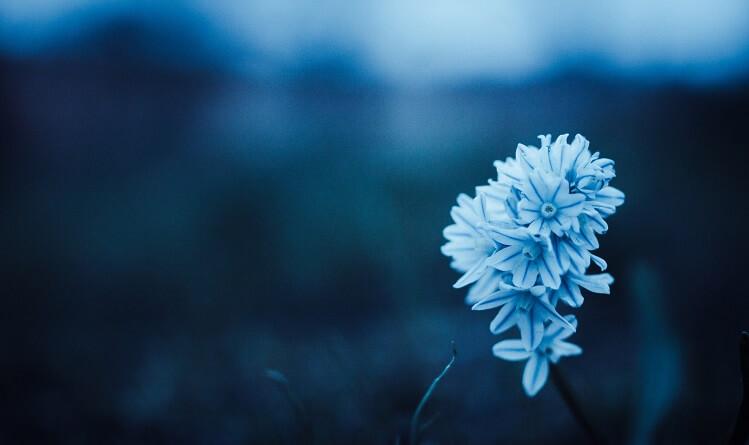 blue-flora