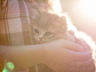 守られてる子猫