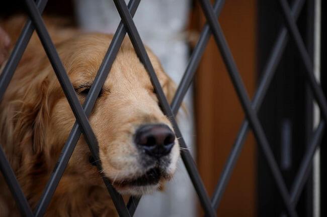 フェンスから顔を出す犬